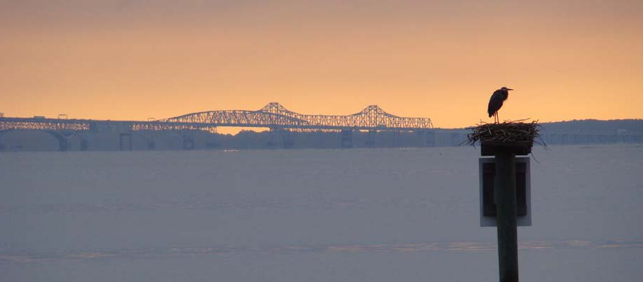 ChesBayBridge_wide.jpg
