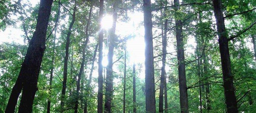 Forest_wide.jpg