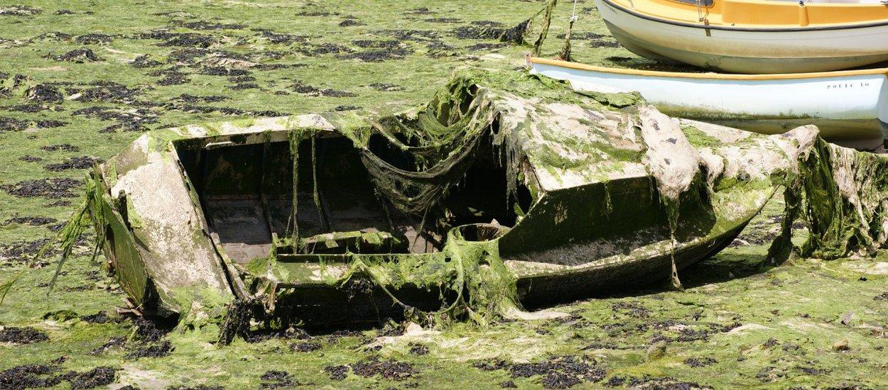 algae-bloom-01-wide.jpg