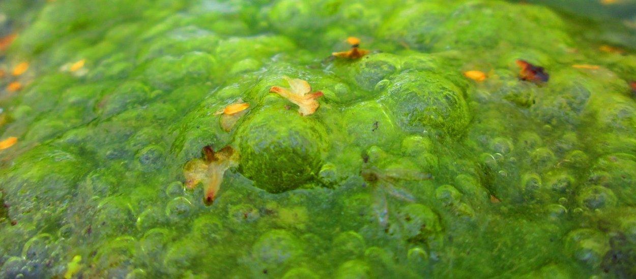 algae-bloom-02-wide.jpg