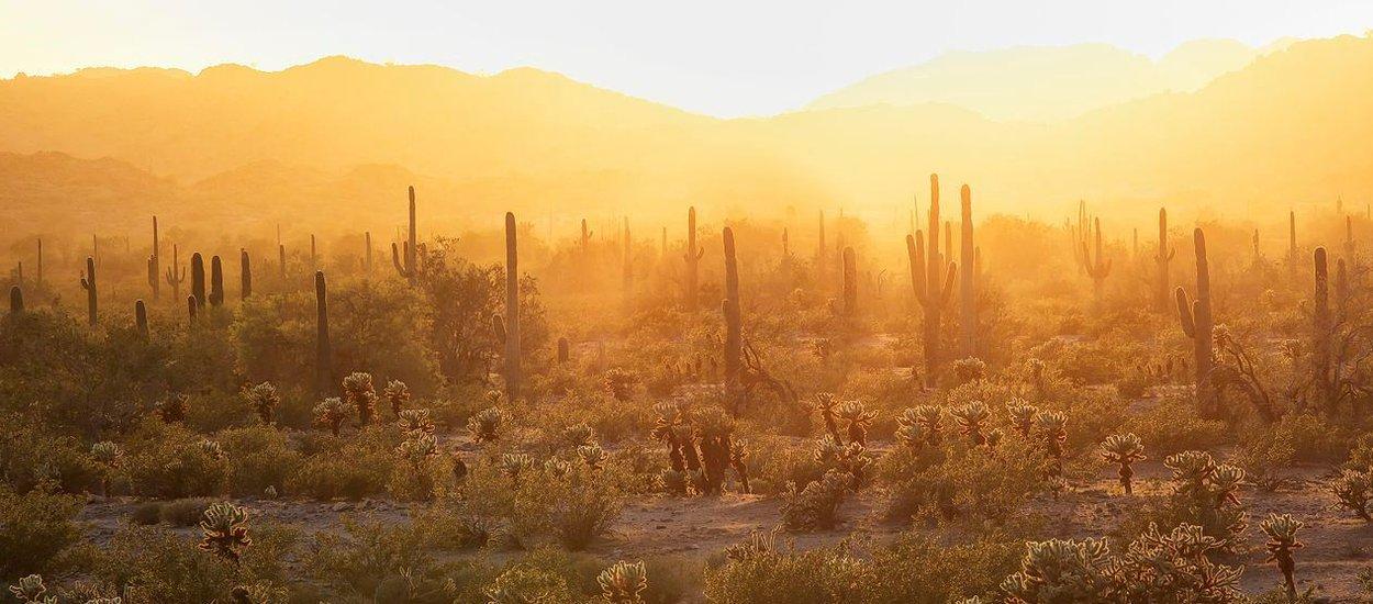 blm-sonoran-desert-nat-Monument-wide.jpg