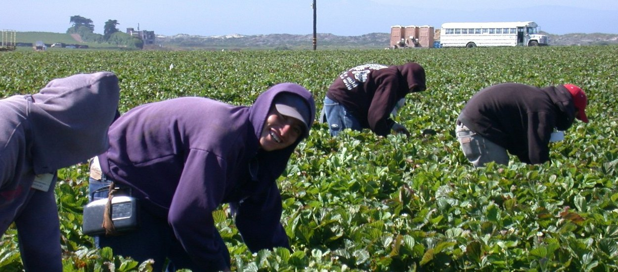 farmworkers-ca-strawberry-field-wide.jpg
