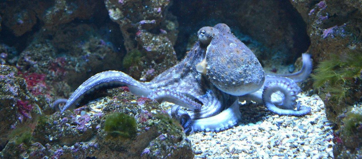 octopus-wide.jpg
