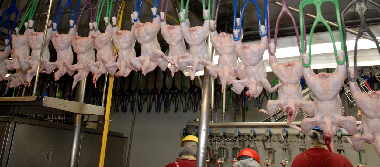 poultry-processing-line-wide.jpg