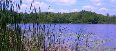 wetland.jpg