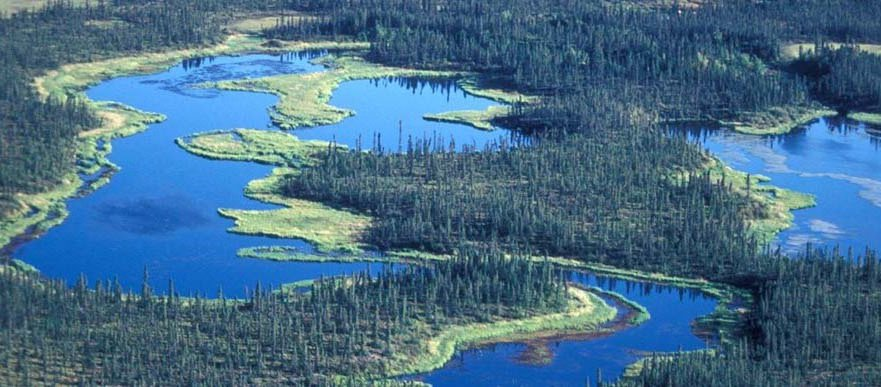 wetland2_wide.jpg