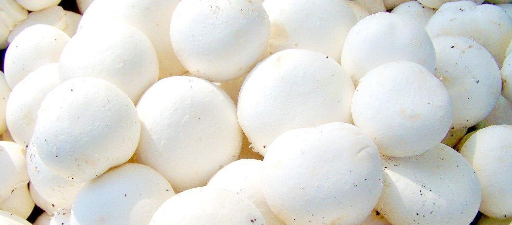 white_button_mushroom_wide.jpg
