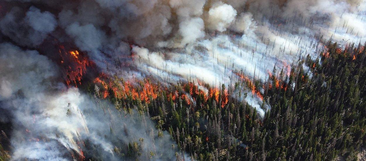 wildfire01-wide.jpg