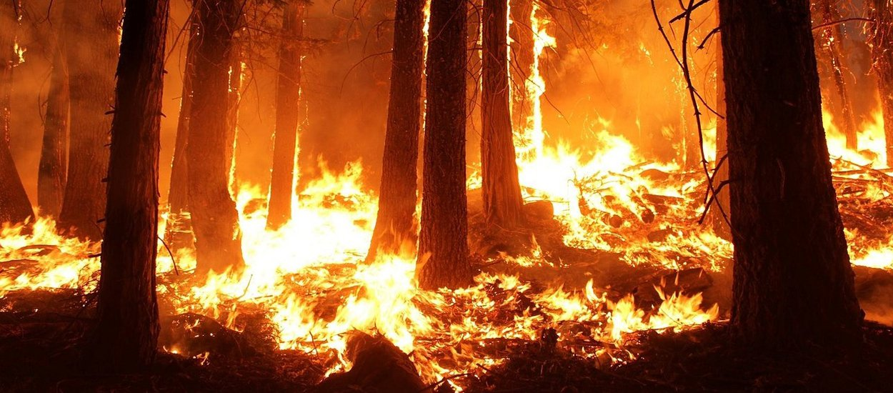 wildfire02-wide.jpg